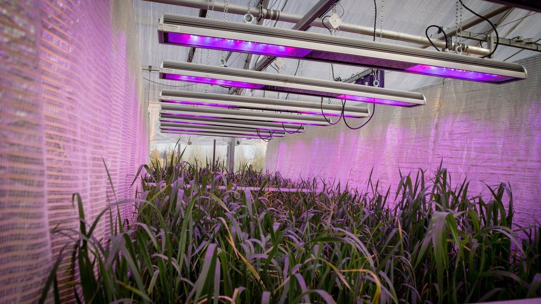 coming soon: Spectro Light Horticulture Danish trolleys grow light